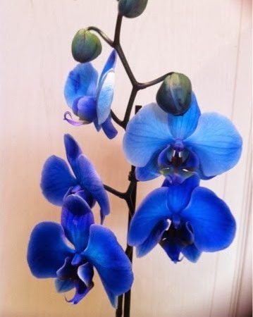 My Orchid love!