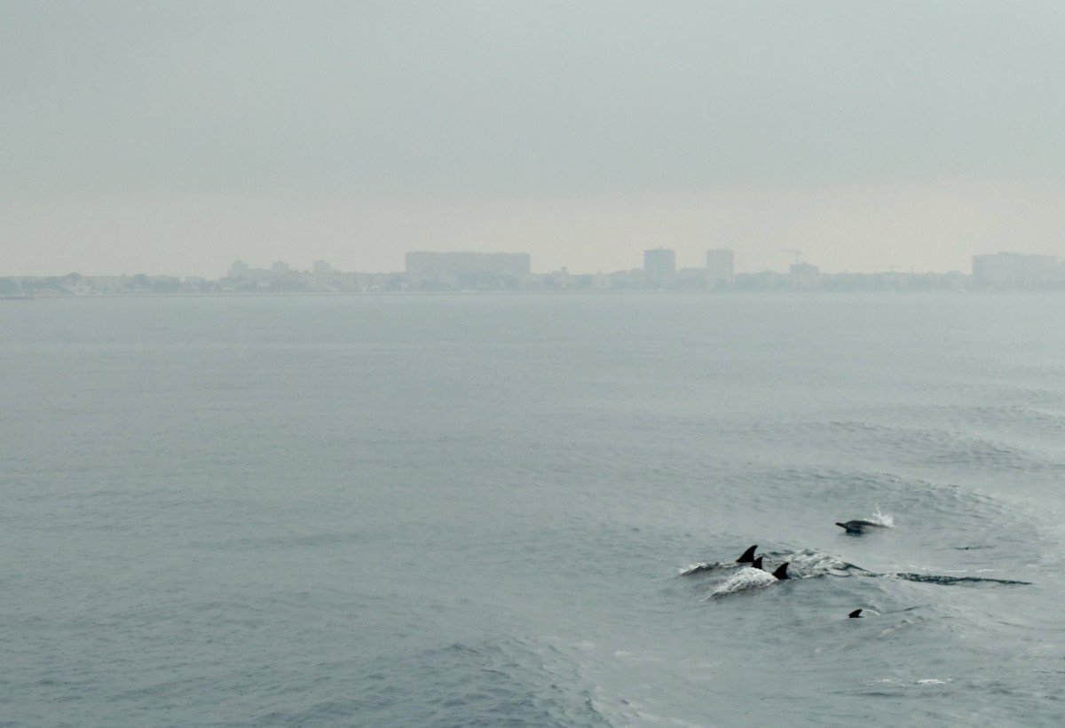 Dolphins of the coast of gibralter. 10 things I love about cruising Royal Caribbean Independence of the Seas