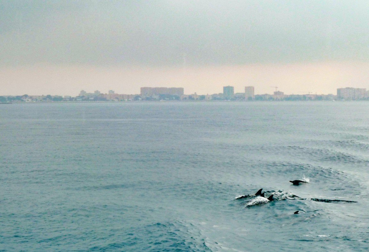 These 20 Tips Will Help you Relax on a Mediterranean Cruise Dolphins of of the coast of Gibraltar