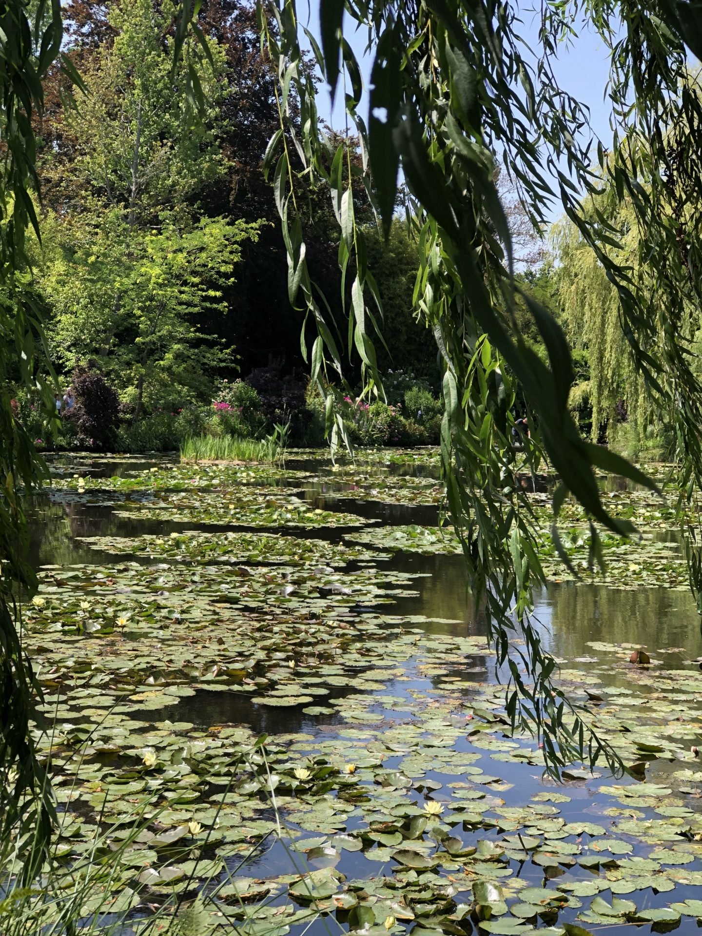 The willow tree that dangles over the pond in Claude Monet's Water lily Garden