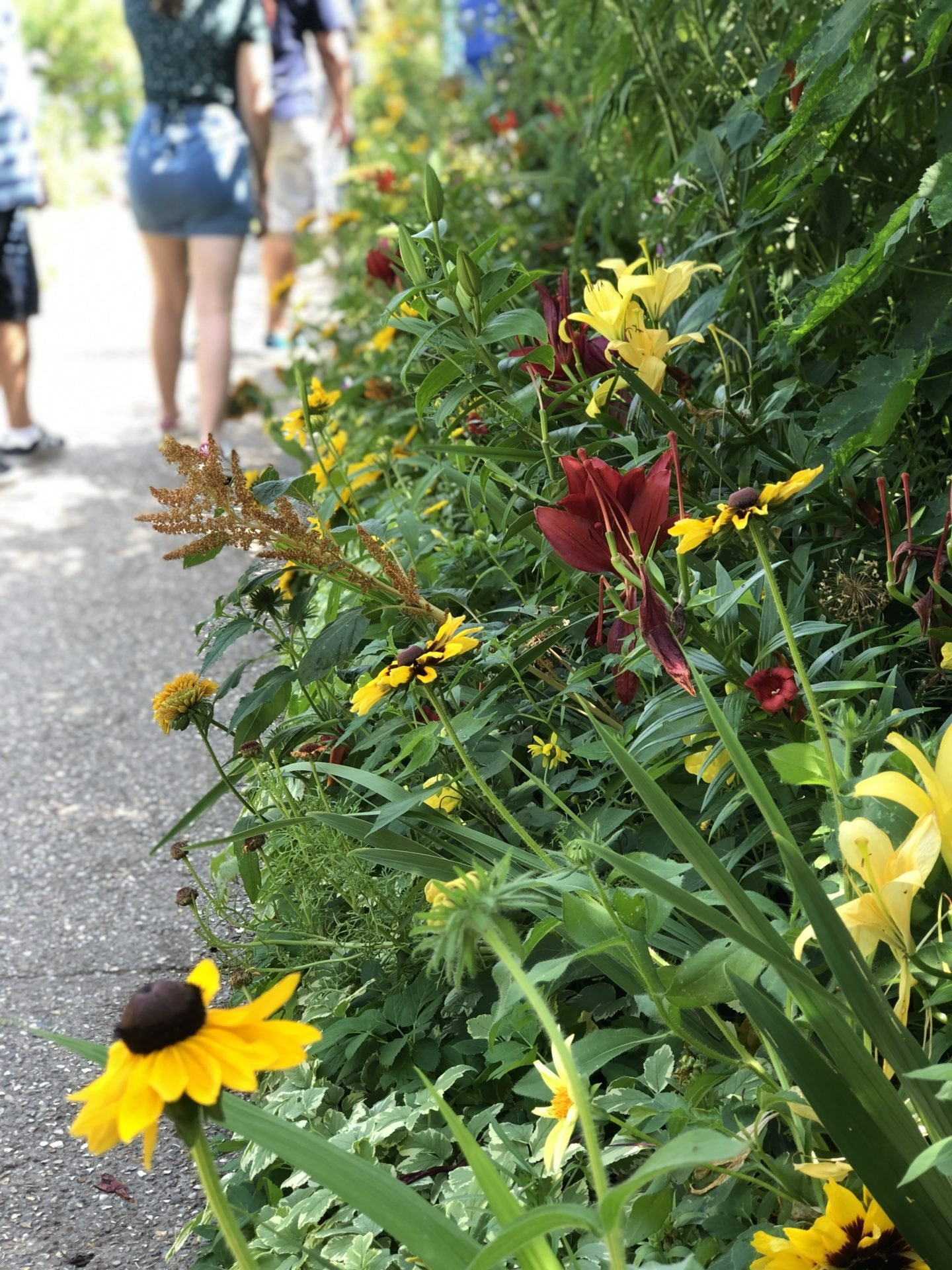 A bed of yellow and red flowers in the Clos Normand Garden at the Foundation of Claude Monet.